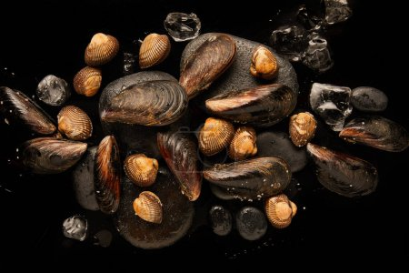 Photo for Top view of uncooked cockles and mussels on stones near scattered ice cubes isolated on black - Royalty Free Image