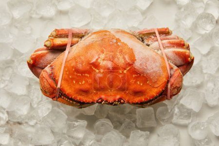 Photo for Top view of frozen uncooked tied up crab on ice cubes on white - Royalty Free Image