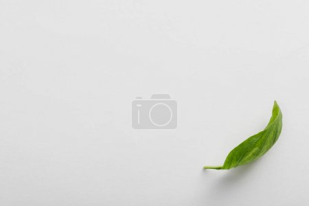 Photo for Top view of fresh fragrant basil leaf on white background - Royalty Free Image