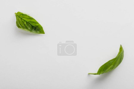 Photo for Top view of fresh green basil leaves on white background - Royalty Free Image