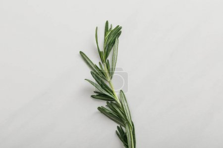 Photo for Top view of fresh rosemary twig on white background - Royalty Free Image