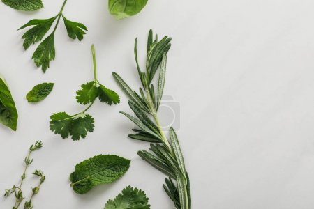 Photo for Top view of basil, cilantro, parsley, rosemary and thyme sprigs on white background - Royalty Free Image