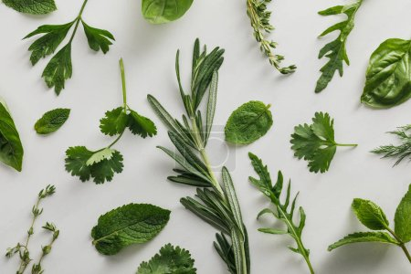 Photo for Top view of arugula, basil, cilantro, dill, parsley, rosemary and thyme sprigs on white background - Royalty Free Image