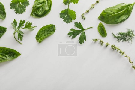 Photo for Top view of basil, dill, peppermint, cilantro, parsley and thyme twigs on white background - Royalty Free Image