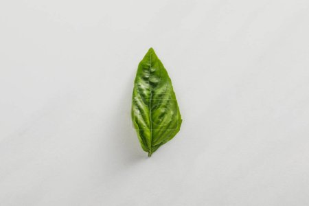 Photo for Top view of fresh green basil leaf on white background - Royalty Free Image