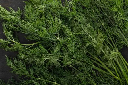 Photo for Close up view of fresh green dill bundle on dark surface - Royalty Free Image