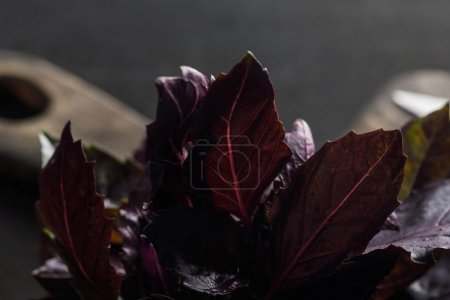 Photo for Close up view of fresh purple basil leaves near brown wooden cutting board on dark background - Royalty Free Image