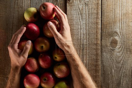 cropped view of man holding apples ow wooden surface