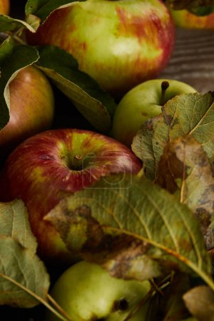 Photo for Close up view of fresh ripe apples with leaves on wooden surface - Royalty Free Image