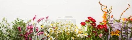 Foto de Foto panorámica de racimos de diversas flores silvestres sobre fondo blanco con espacio de copia - Imagen libre de derechos