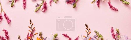 Foto de Foto panorámica de flores silvestres frescas sobre fondo rosa con espacio de copia - Imagen libre de derechos