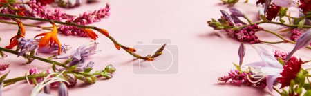 Photo for Panoramic shot of diverse wildflowers on pink background - Royalty Free Image