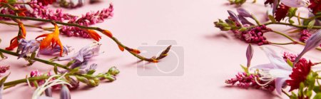 Photo pour Coup panoramique de fleurs sauvages diverses sur fond rose - image libre de droit