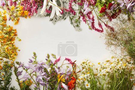 Photo for Top view of diverse wildflowers on white background - Royalty Free Image