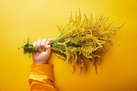 Photo for Cropped view of man holding bunch of goldenrod on yellow background - Royalty Free Image