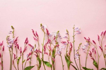 Photo pour Vue de dessus des branches de fleurs sauvages sur fond rose avec espace de copie - image libre de droit