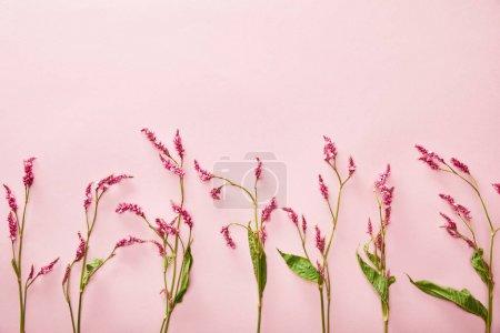 Foto de Vista superior de ramitas de flores silvestres sobre fondo rosa con espacio para copiar - Imagen libre de derechos