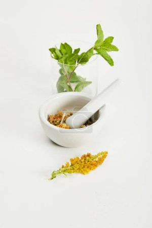 Photo for Mortar and pestle with herbal mix near goldenrod twig and glass with fresh mint on white background - Royalty Free Image