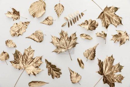 Photo pour Vue de dessus des feuilles dorées automnales sur fond blanc - image libre de droit