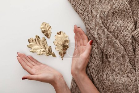 Photo for Cropped view of female hands near golden leaves and knitted brown sweater on white background - Royalty Free Image