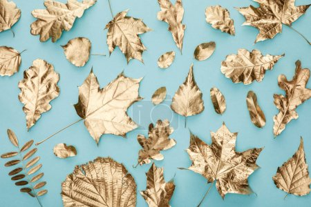 Photo for Top view of painted autumnal golden foliage on blue background - Royalty Free Image