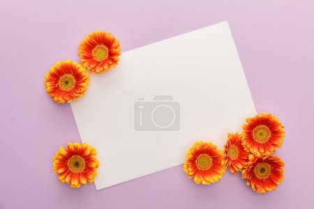 Foto de Top view of orange gerbera flowers and white blank paper on violet background - Imagen libre de derechos