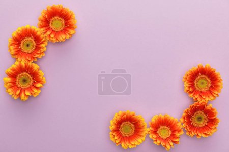 Photo for Top view of orange gerbera flowers on violet background with copy space - Royalty Free Image
