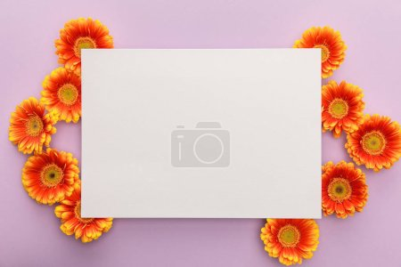Photo for Top view of orange gerbera flowers and white blank paper on violet background - Royalty Free Image