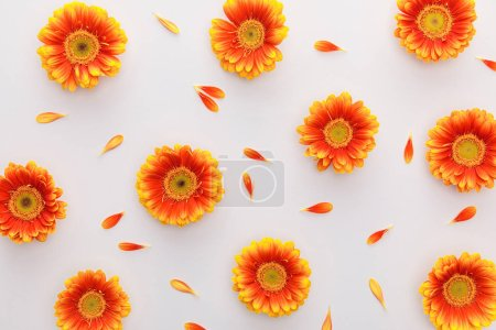 Photo for Top view of orange gerbera flowers with petals on white background - Royalty Free Image
