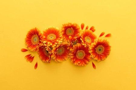 Photo pour Vue en haut de fleurs gerbera orangées avec pétales sur fond jaune - image libre de droit