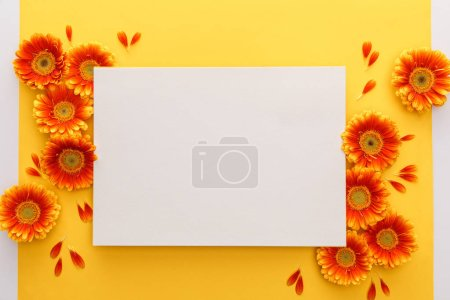 Photo for Top view of orange gerbera flowers with petals and white blank card on yellow background - Royalty Free Image