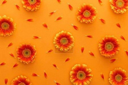 Photo pour Vue du haut des fleurs de gerbera avec pétales sur fond orange - image libre de droit