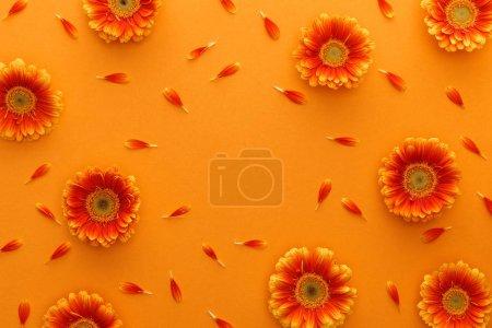 Foto de Vista superior de las flores gerbera con pétalos en fondo naranja. - Imagen libre de derechos