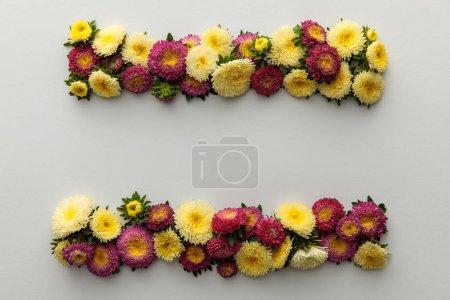 Photo pour Vue du haut des asters jaunes et violets sur fond blanc avec espace de photocopie - image libre de droit