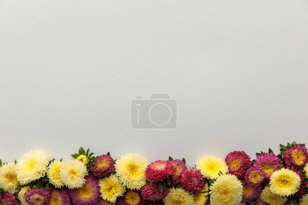 Photo for Top view of yellow and purple asters on white background with copy space - Royalty Free Image