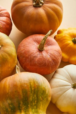 Photo for Ripe whole colorful pumpkins on beige background - Royalty Free Image