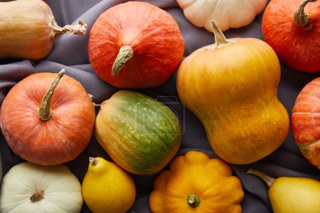Photo pour Ripe whole colorful pumpkins on grey cloth - image libre de droit