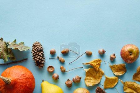 Photo pour Citrouilles colorées entières mûres et décor automnal sur fond bleu avec espace de copie - image libre de droit