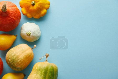 Photo for Ripe whole colorful pumpkins on blue background with copy space - Royalty Free Image