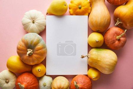 Photo pour Ripe whole colorful pumpkins on pink background with white blank paper - image libre de droit