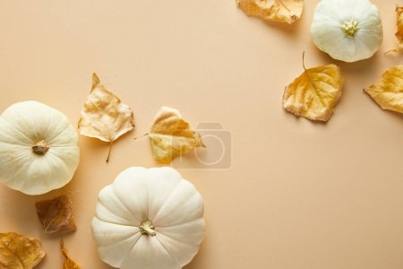 Photo for Top view of ripe whole white pumpkins with dry golden foliage on beige background - Royalty Free Image