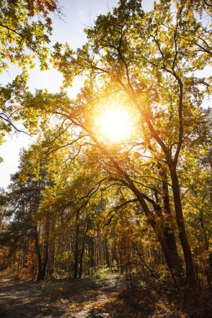 sun, trees with yellow and green leaves in autumnal park at day