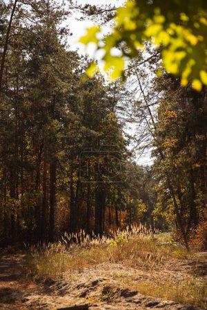 Photo pour Foyer sélectif des arbres avec des feuilles vertes dans le parc automnal le jour - image libre de droit