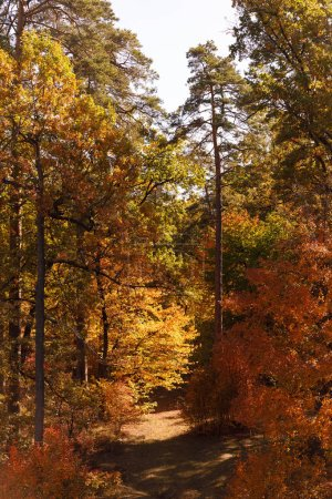 Photo pour Arbres à feuilles jaunes et vertes dans le parc automnal le jour - image libre de droit