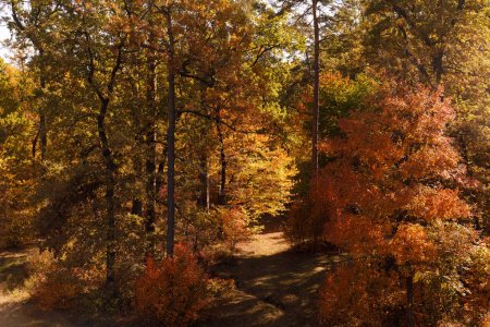 Photo pour Arbres avec des feuilles jaunes et vertes dans le parc automnal le jour - image libre de droit
