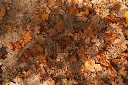 Photo for Top view of yellow and dry leaves in autumnal park at day - Royalty Free Image