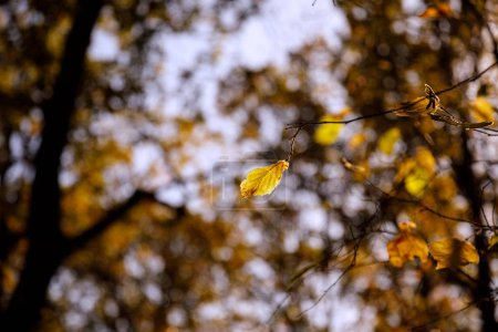 Photo for Selective focus of trees with yellow leaves in autumnal park at day - Royalty Free Image
