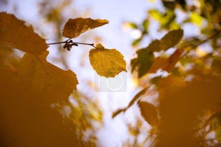 Foto de Enfoque selectivo de árboles con hojas amarillas en el parque autumnal día a día. - Imagen libre de derechos
