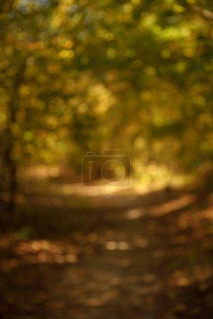 Photo pour La concentration sélective des arbres à feuilles jaunes et vertes dans le parc automnal au jour - image libre de droit