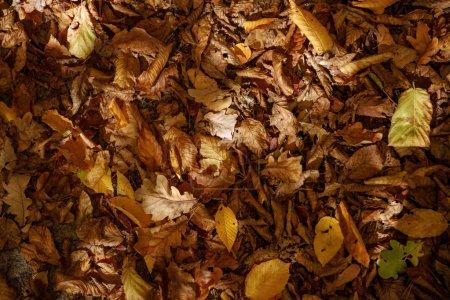 Photo pour Vue de dessus des feuilles jaunes et sèches dans le parc automnal le jour - image libre de droit